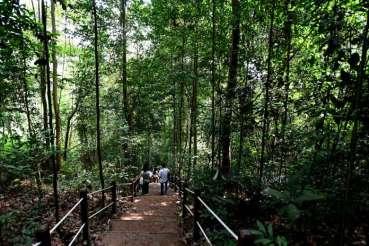 bukit-timah-reserve-02