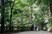 bukit-timah-reserve